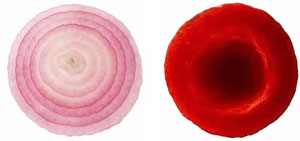 onion-cell